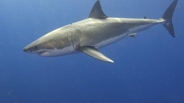 How Do Sharks Move?
