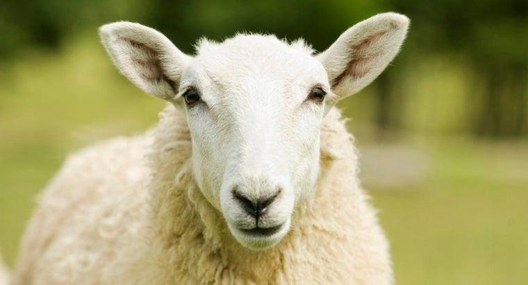sheep-brain-human-brain-compare