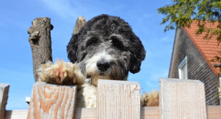 Are There Any Sheepadoodle Rescue Organizations? | Reference com
