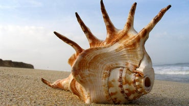 How Are Shells Made?