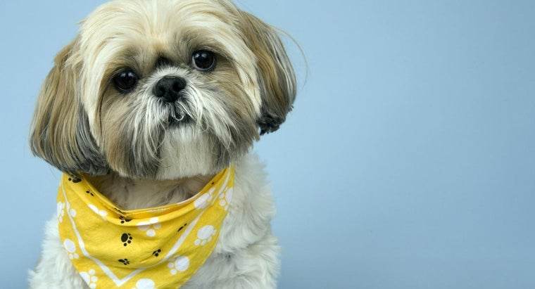 What Are Some Shih Tzu Grooming Styles Referencecom