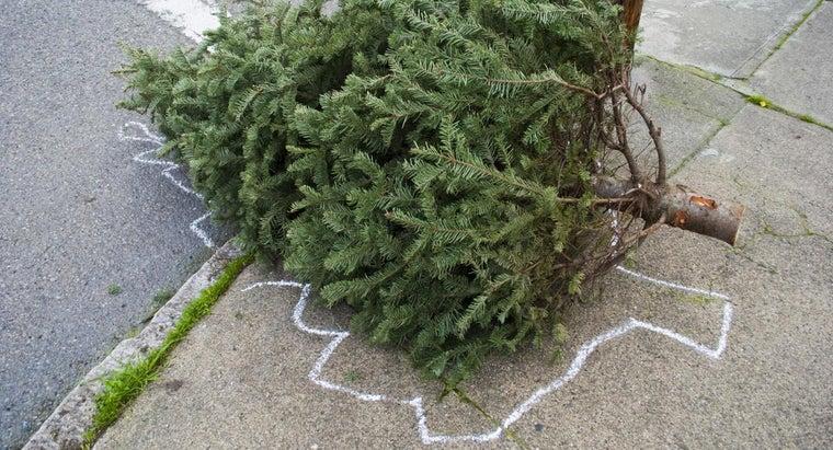 should-christmas-trees-taken-down