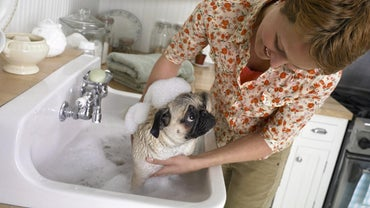 What Should I Do If My Dog Ate a Bar of Soap?
