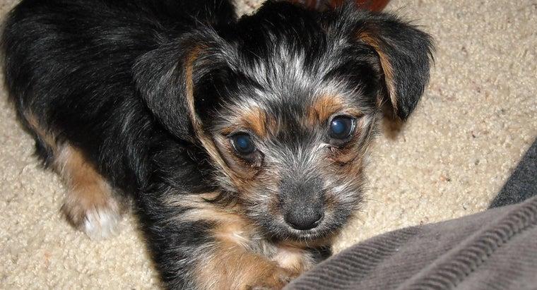 should-dog-vet-treat-wart