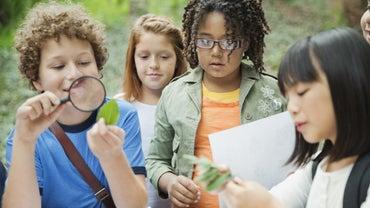 How Should You Explain Cellular Respiration to Kids?
