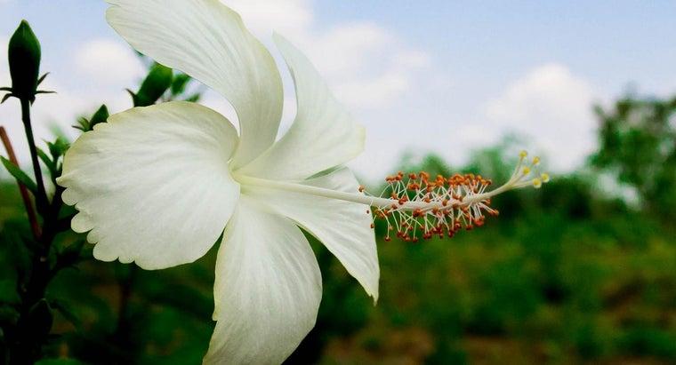 should-prune-hibiscus-plants