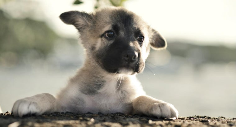 should-raise-baby-german-shepherds