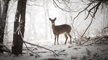 Why Should Spotlighting Deer Be Illegal?
