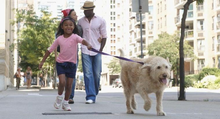 should-walk-dog