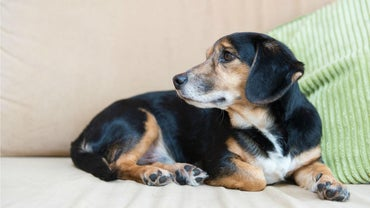 What Are Some Signs That Your Dog Might Be Having Health Issues?