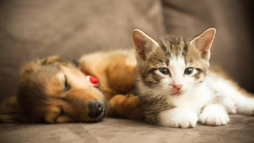 What Are Some Similarities Between Cats and Dogs?