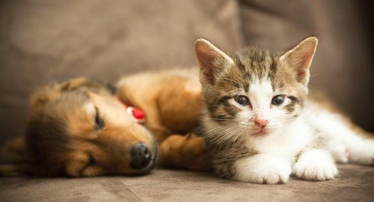 similarities-between-cats-dogs