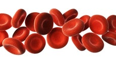 What Are Six Substances Transported by Blood?
