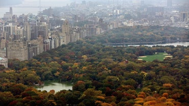 What Is the Size of Central Park in New York?