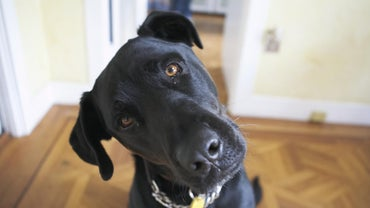What Is the Size of a Dog's Brain?