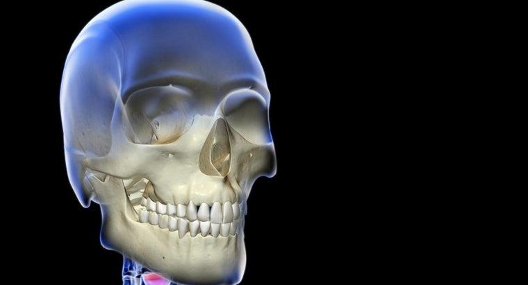 skeletal-system-consist