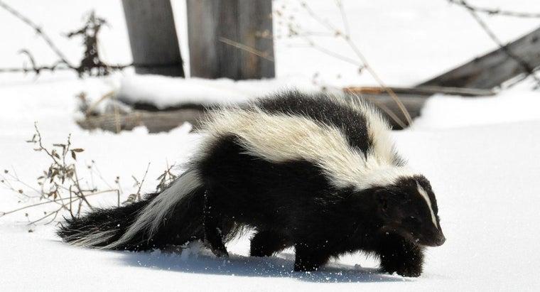 skunk-s-habitat