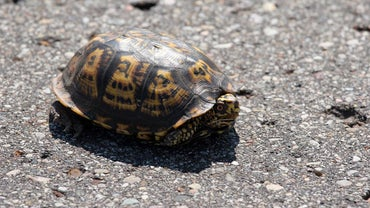 What Are the Slowest Animals on Earth?