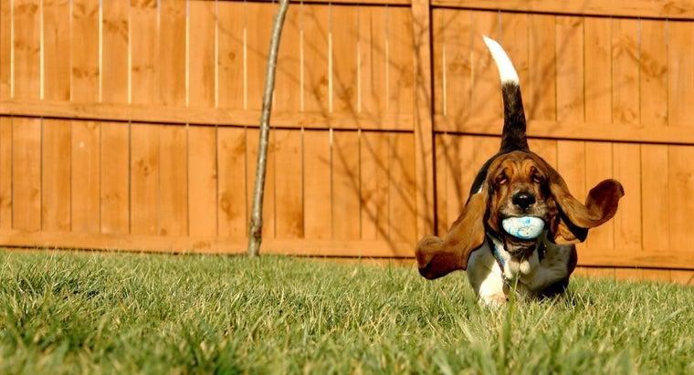 slowest-dog-breed