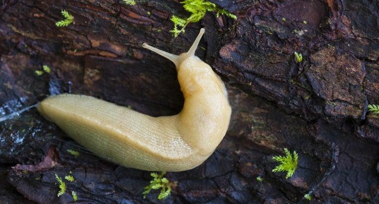 slugs-harmful-dogs