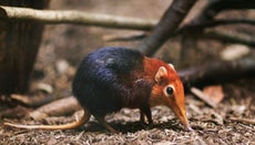 What Is the Smallest Mammal on Earth?