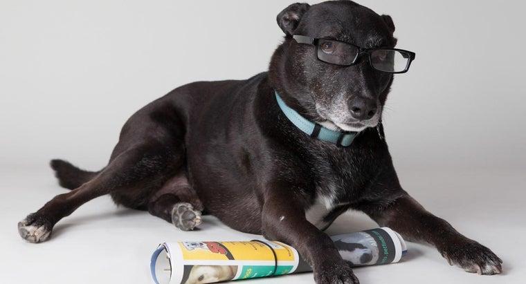 smartest-dogs