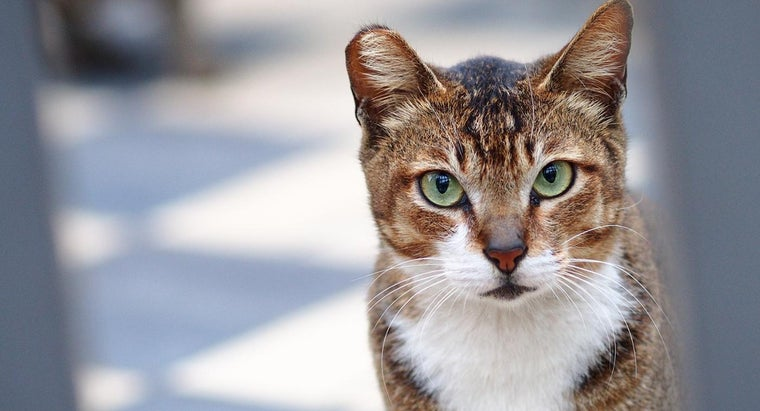smell-cat-urine-out-carpet