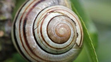 How Do Snail Shells Grow?