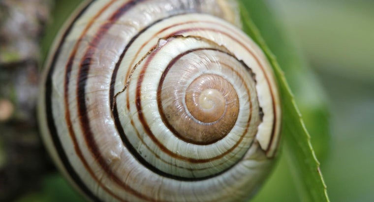 snail-shells-grow