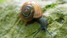 How Do Snails Breathe?