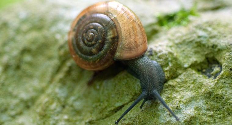 snails-breathe