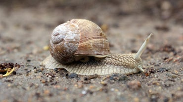 What Do Snails Eat and Drink?