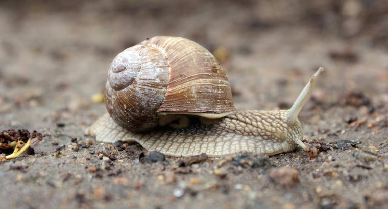 snails-eat-drink