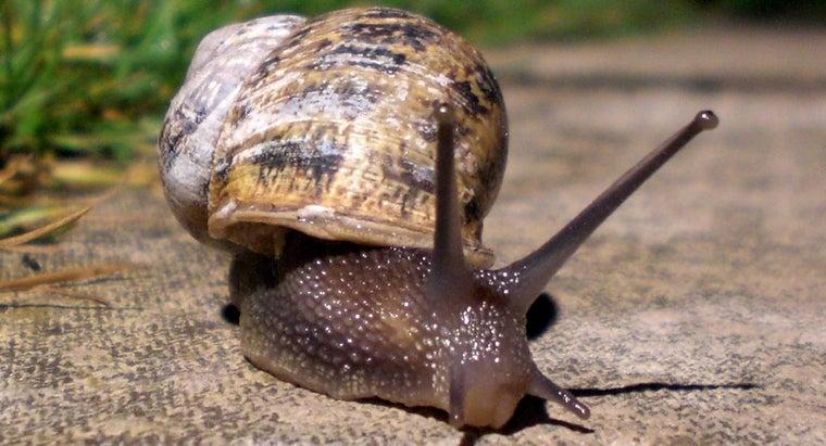snails-make-noises