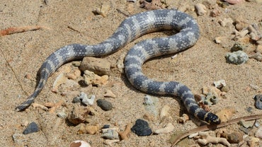 Is a Snake an Omnivore?