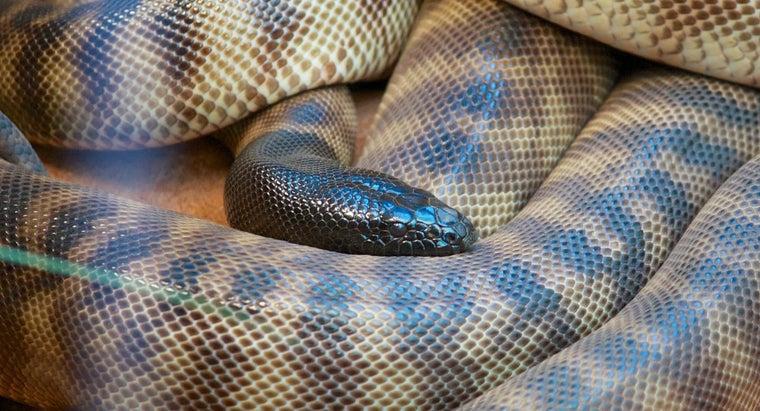 snake-s-enemies