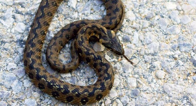 snake-symbolize