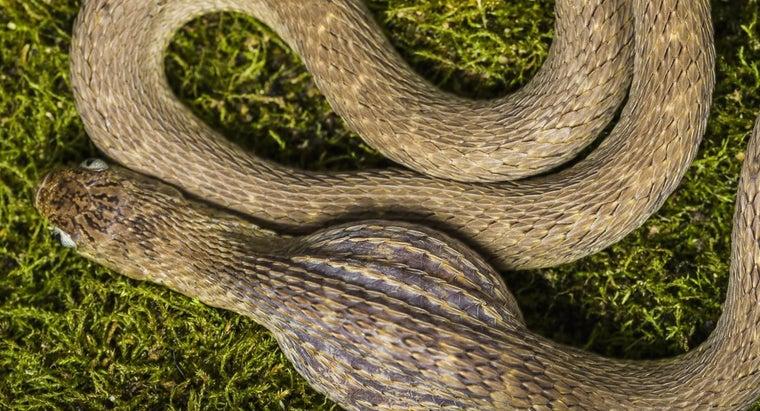 snakes-eat