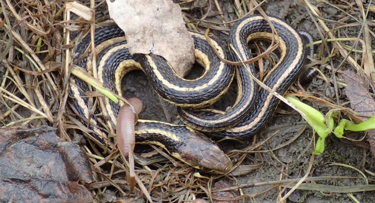 snakes-give-birth
