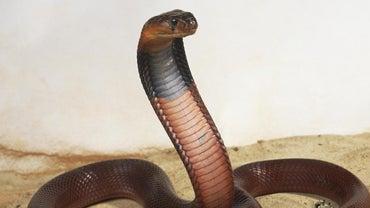 Where Do Snakes Live?