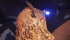 How Are Snakes and Owls Alike in Their Eating Habits?