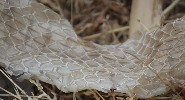 snakes-shed-skin