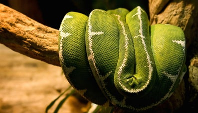 Do Snakes Sleep at Night?