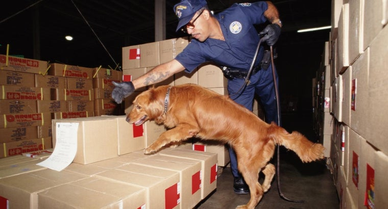 sniffer-dogs-trained