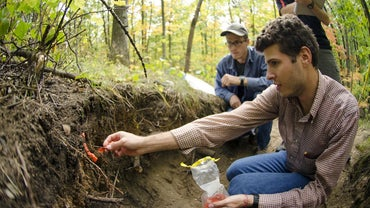 What Are Soil Horizons?