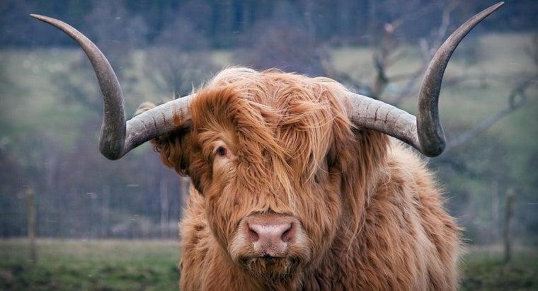 sound-bull-make
