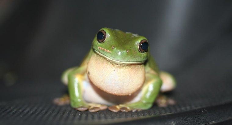 sound-frog-make