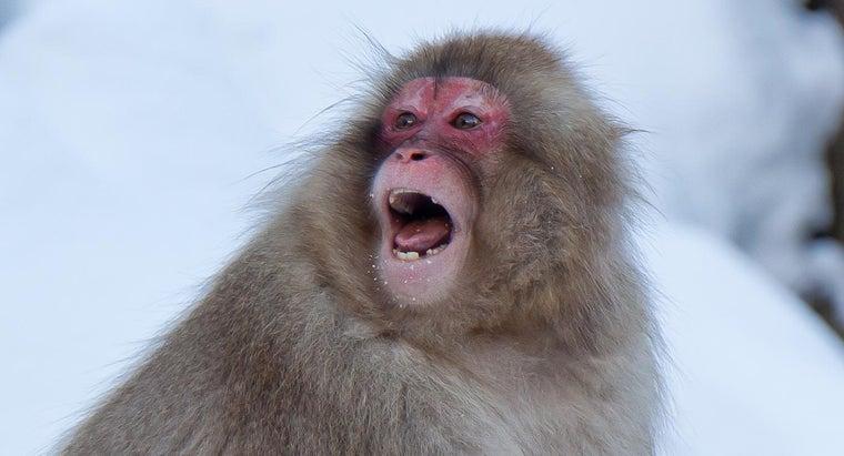 sound-monkey-make
