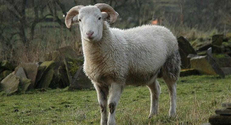 sound-sheep-make