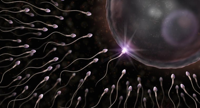 sperm-cell-tail